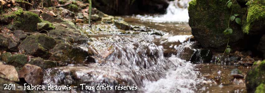 cours d'eau dans les bois de saint bonnet le froid