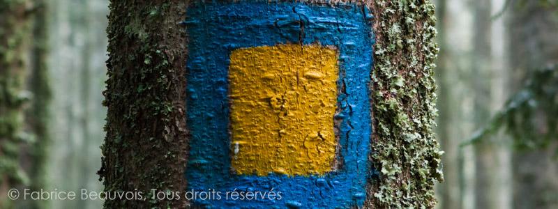 Photographie réalisée par Fabrice Beauvois un après-midi de printemps en forêt